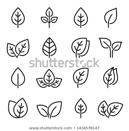 fresh green leaves icon set stock photo © wad