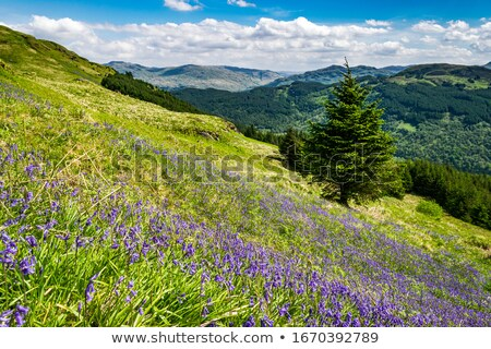 Scenic Scottish landscape with meadow of wildflowers  Stock photo © Julietphotography