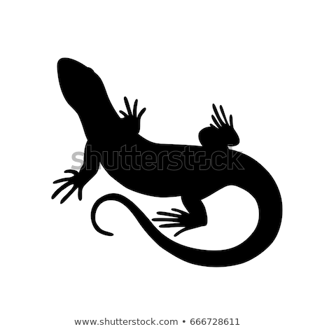 silhouette of lizard stock photo © perysty