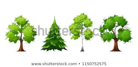 Cartoon abedul dibujado a mano vector ilustración árbol Foto stock © perysty