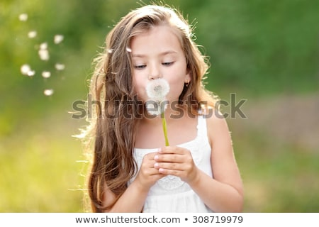 little girl with dandelions stock photo © dacasdo