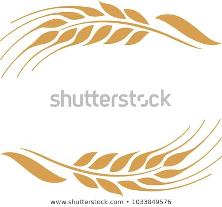 złoty · pszenicy · dwa · dojrzały · zbóż · do · góry · nogami - zdjęcia stock © farina6000