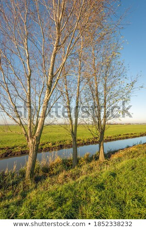 Bare branched tree on farmland Stock photo © jrstock