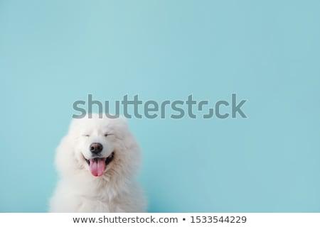 Сток-фото: собака · саду · области · образование · зеленый · голову