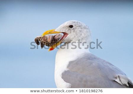 martılar · iki · gökyüzü · uzay · grup · kuşlar - stok fotoğraf © jkraft5