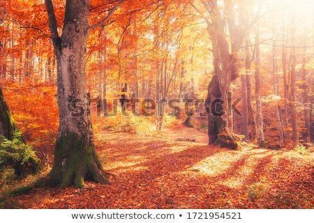 Zdjęcia stock: Jesienią · spadek · krajobraz · lasu · słońce