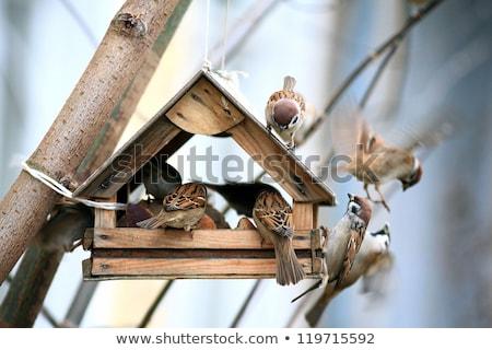 птица · дерево · лет · парка · продовольствие · строительство - Сток-фото © alex_grichenko