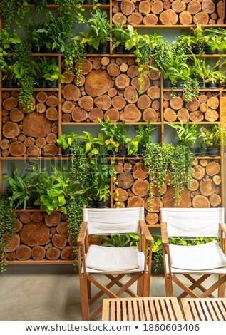 rosa · cadeira · verde · parede · interior · cena - foto stock © bertl123