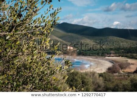 Olajfa domb Korzika egyedüli hegyek északi Stock fotó © Joningall