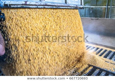 Dry Stock Feeding Stock photo © rghenry