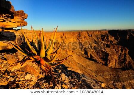Hal folyó kanyon kilátás Namíbia természet Stock fotó © JFJacobsz