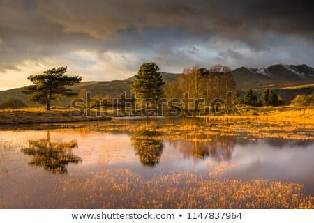 Eau lake district nature arbres beauté bleu Photo stock © chris2766