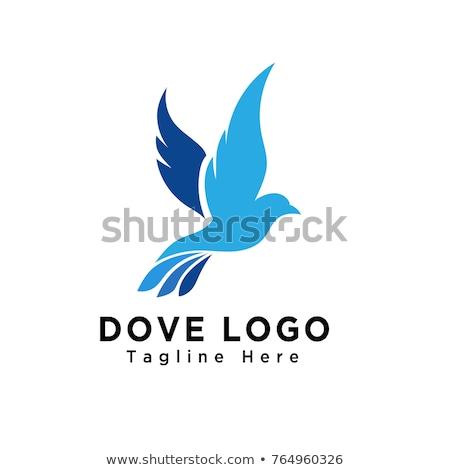 colombe · logo · ligne · vecteur · modèle · unité - photo stock © ggs