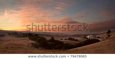 Fog over the rolling hills of California coast Stock photo © emattil