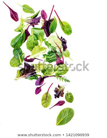 Fraîches grec basilic alimentaire feuille vert Photo stock © haraldmuc