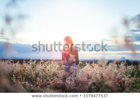 Flower silhouette with backlit sunshine in sky Stock photo © cienpies