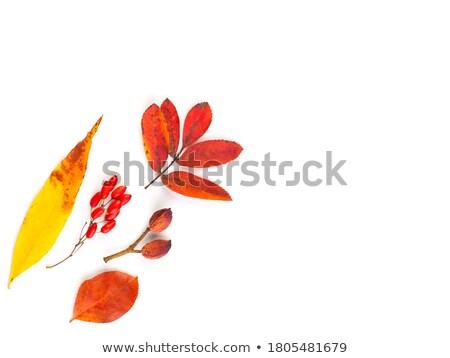 groot · boom · eiken · geïsoleerd · witte · gras - stockfoto © zerbor