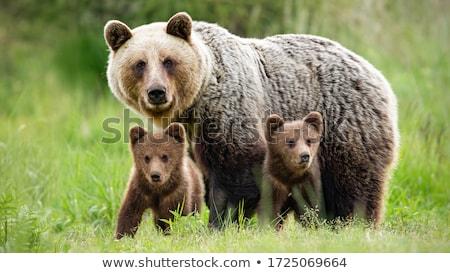 bruin · bont · illustratie · natuur · achtergrond - stockfoto © bluering