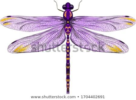 Libélula roxo cor ilustração feliz natureza Foto stock © bluering