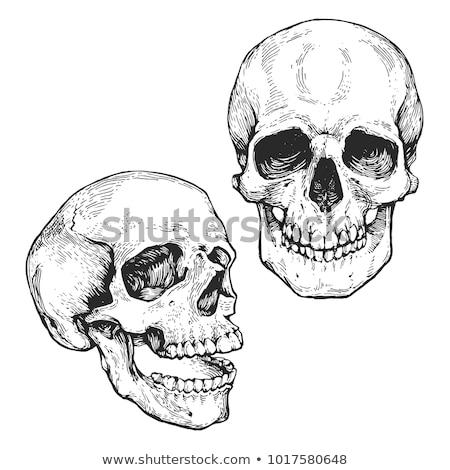 Schedel schets ontwerp gezicht achtergrond teken Stockfoto © doomko