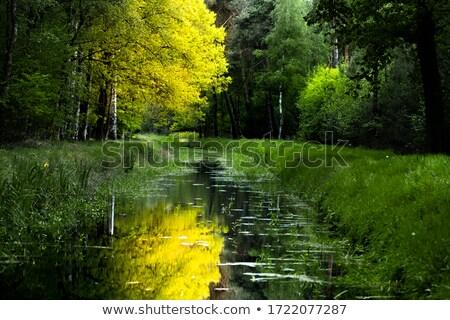 scenic oak forest in sun Stock photo © meinzahn