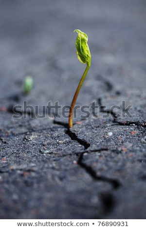 Plant growing through dry cracked soil Stock photo © Digifoodstock