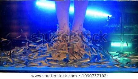 Peixe pedicure pé azul água tratamento Foto stock © popaukropa