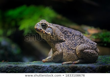 Karakurbağası portre tek renkli makro Asya doku Stok fotoğraf © Tawng