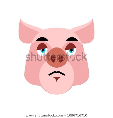 Porco triste emoção branco fazenda Foto stock © popaukropa
