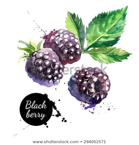 акварель иллюстрация BlackBerry краской фон черный Сток-фото © Sonya_illustrations
