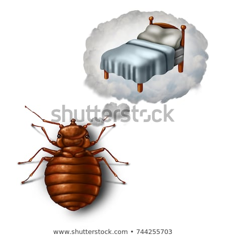 Bed Bug Dreaming Stock photo © Lightsource
