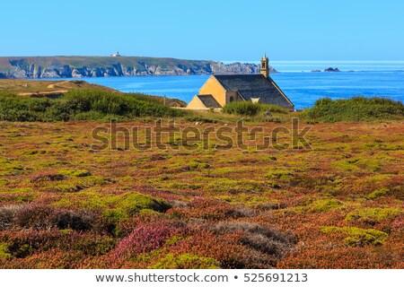 ponto · França · flor · praia · natureza · mar - foto stock © stefanoventuri