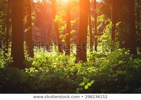 Photo stock: Arbre · racines · belle · forêt · printemps · nuageux