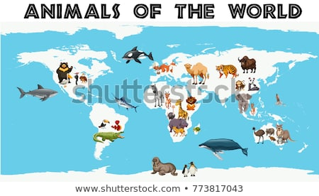 Different types of animals around the world on the map Stock photo © bluering
