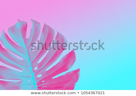 Stock photo: colorful trendy design monster leaf on a ultra violet, pink and blue duotone summer background