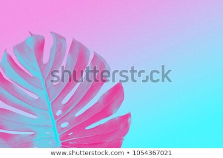 種 · モンスター · 夏 - ストックフォト © artjazz
