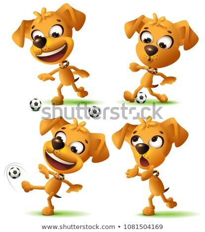黄色 面白い 犬 サッカーボール 孤立した ストックフォト © orensila