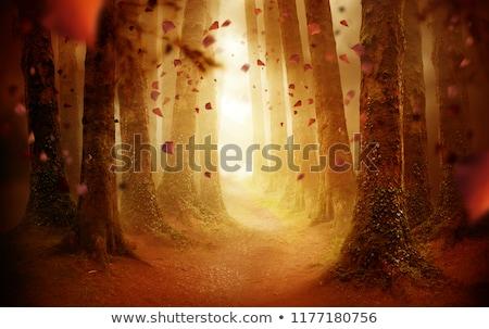Titokzatos erdő ösvény sötét szeszélyes éjszaka Stock fotó © solarseven