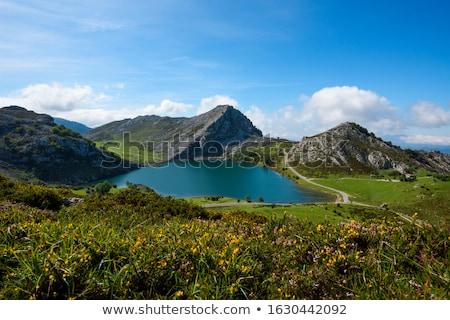 bruin · vee · blauwe · hemel · naar · natuur - stockfoto © lunamarina
