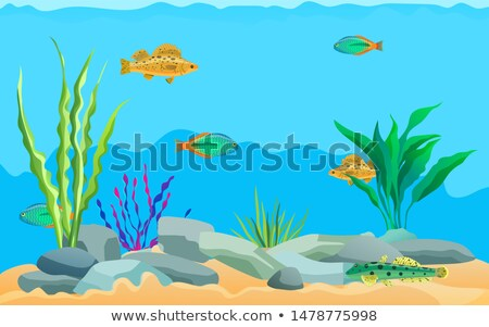 colorful cartoon aquarium fishes set promo poster stock photo © robuart