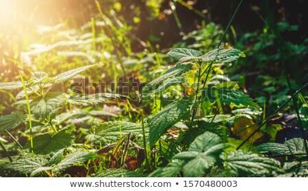 Tasse blanche thé floraison haut vue Photo stock © madeleine_steinbach
