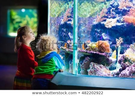 Küçük erkek kız izlerken tropikal mercan Stok fotoğraf © galitskaya