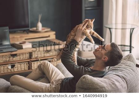Foto stock: Homem · jogar · gatinho · gato · humanismo · mãos