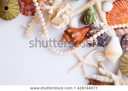 strandzand · parel · ketting · shell · zeester · zomer - stockfoto © lunamarina