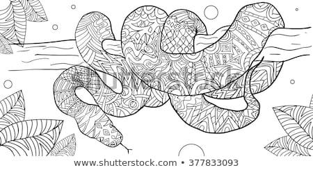 Kígyó kézzel rajzolt dekoratív póló egyéb díszítések Stock fotó © Natalia_1947