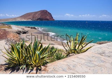 Tenerife plants Stock photo © Maridav
