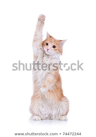 cute red and white cat waving Stock photo © feedough