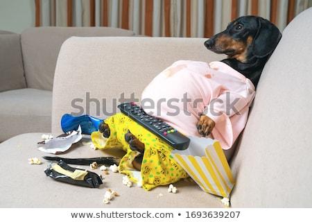 такса · собака · есть · цветок · глаза - Сток-фото © leungchopan