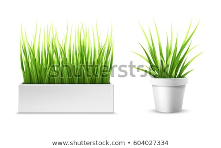 white flowerpot with green grass Stock photo © LoopAll
