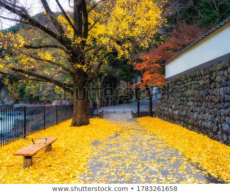 Fall Leaves on Benches Along Park stock photo © davidgn